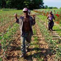 jamaican-farm-workers-9-3