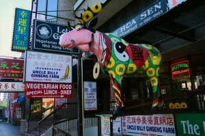 chinatown cow2(7x10)