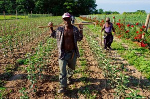 Jamaican-farm-workers-9 (3)
