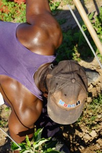 Jamaican farm workers 4