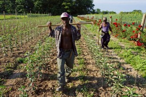 Jamaican farm workers 9